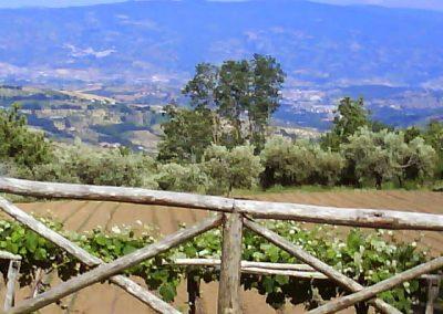 La Forestella Pranzo 15giu2013 - 47