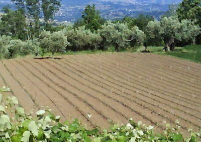 La Forestella Pranzo 15giu2013 - 49