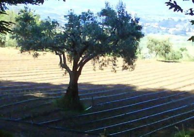 La Forestella Pranzo 15giu2013 - 69